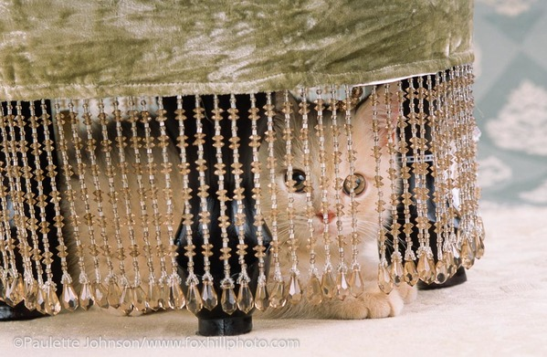 Kitten behind beaded stool