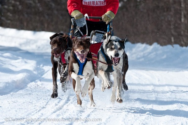 Sled Dog racing in Northern Wisconsin