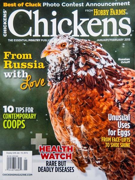 """Chickens"" magazine, Cover Photo"