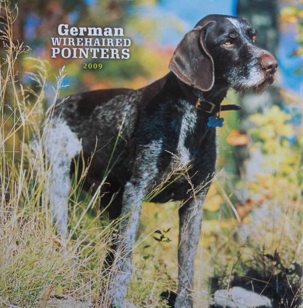 German Wirehaired Pointers calendar - cover photo