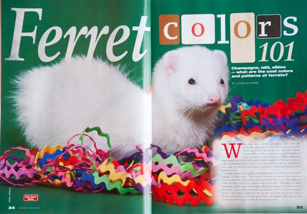 2012 Ferrets USA, many interior images.